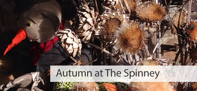 Autumn at The Spinney